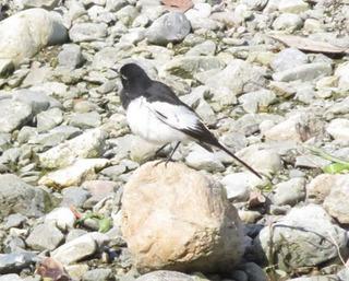 芥川の鳥.jpg