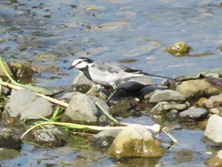 芥川の鳥2.jpg